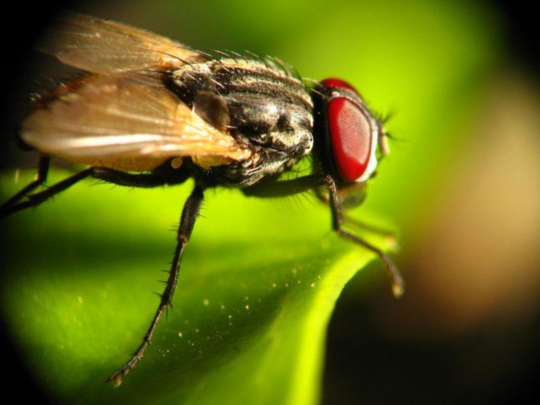 jak pozbyć się much