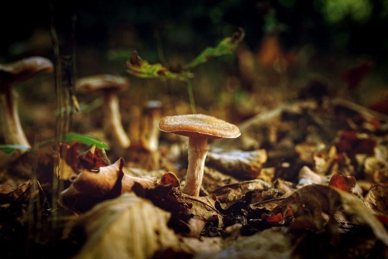 jak-mrozic-grzyby